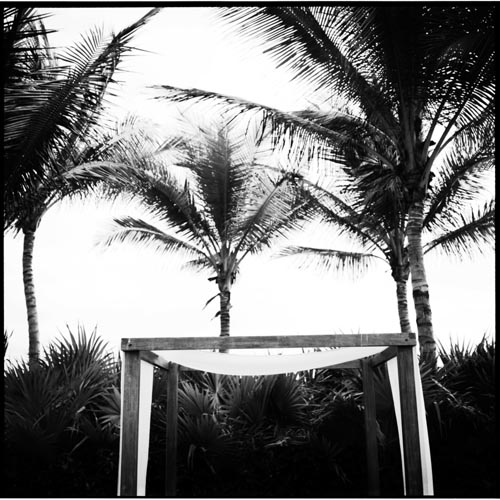 0609-mexicopalms_bw